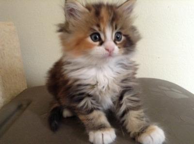 katina2